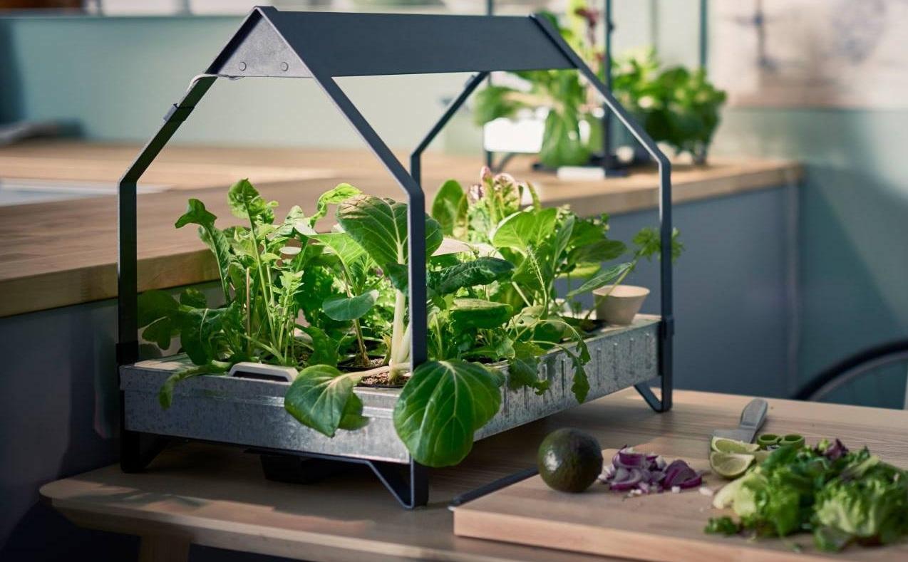 le blog du jardin et de la maison. Black Bedroom Furniture Sets. Home Design Ideas